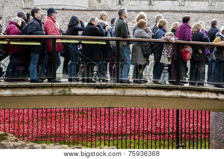 LONDON, UK - NOVEMBER 08: People queueing to see red poppies art installation at Tower of London. November 08, 2014 in London. The ceramic poppies were planted to mark the centenary of WWI's outbreak.