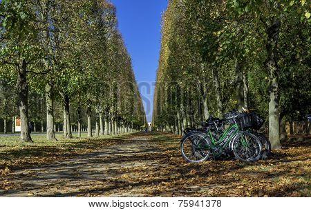 Row Of Bikes In The Versailles Gardens