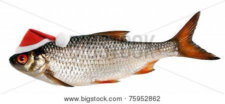 Santa Hat On A Fish