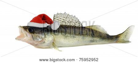 Santa Hat On A Walleye