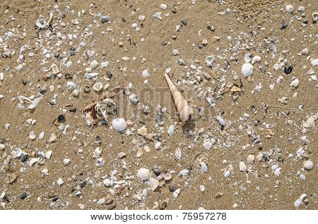 Background And Texture Of Nature Sea Shell Pattern On A Sand Beach In The Summer