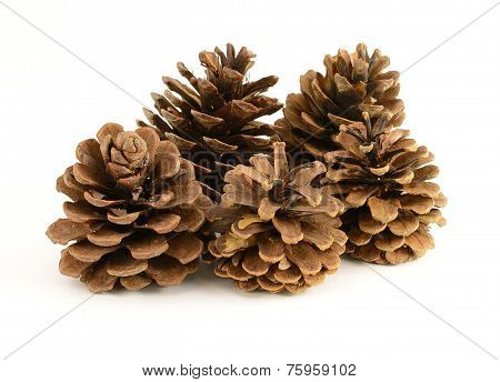 Group Of Pinecones