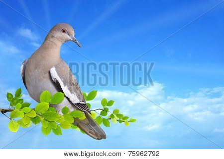 Dove Perched On Branch