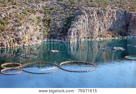 Aquaculture In Greece