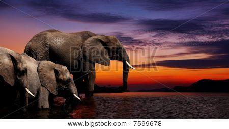 Fantasía de elefante
