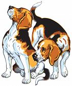 stock photo of foxhound  - two beagle hunting dogs - JPG