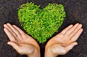 stock photo of environmental conservation  - hands holding green heart shaped tree  - JPG