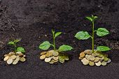 stock photo of sustainable development  - trees growing on coins for sustainable development and economic growth - JPG