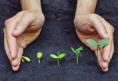 picture of germination  - hands holding plants growing in a sequence of seed germination on soil - JPG