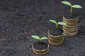 foto of sustainable development  - tress growing on coins  - JPG