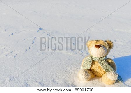 Bear Toy In Snow And Space