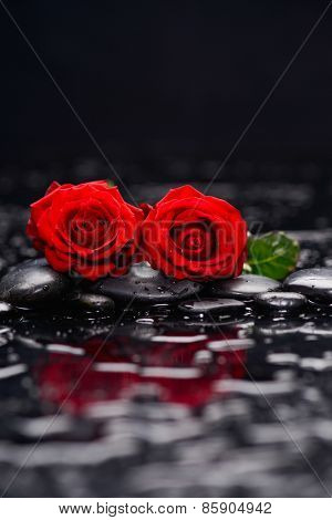 Still life with Red two rose and wet stones