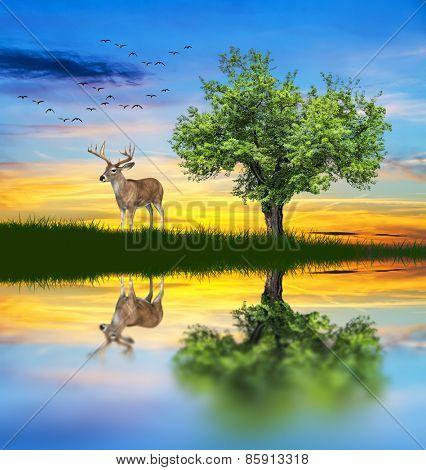 deer in the lake