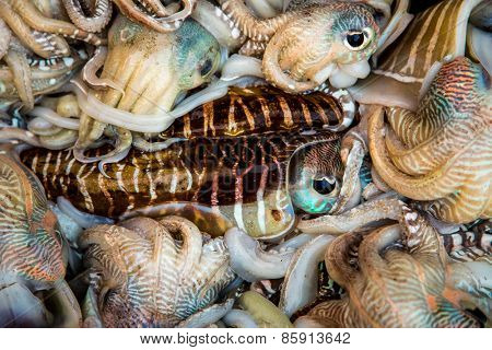 Seafood. Fresh squid tray ...