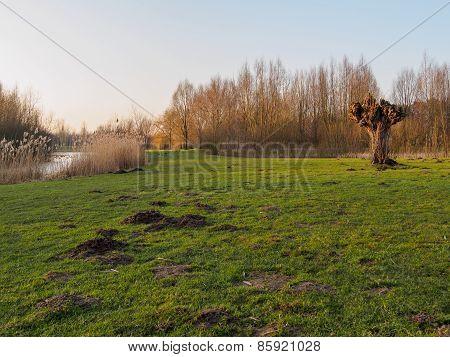 Dutch Grassland By Stream At Sunset