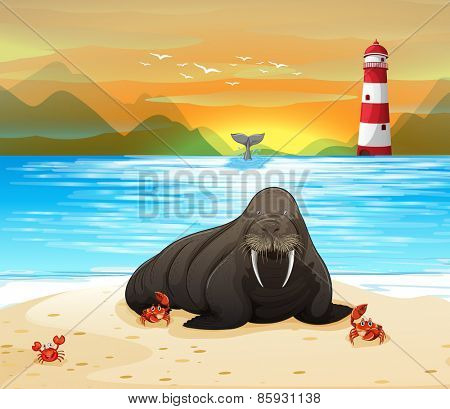 Sea lion on a beach with sunset background