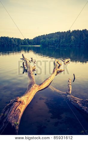 Vintage Lake Sunset With Old Dead Tree Trunk