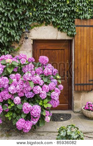 Vivid Pink Hydrangeas Against An Ancient Stone Wall In A Village