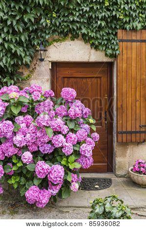 Vivid Pink Hydrangeas Against An Ancient Stone Wall In A Village