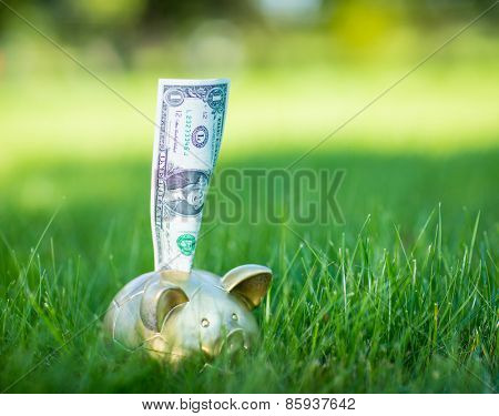 Piggy bank with dollars on grass