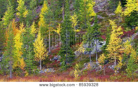 Autumn In Rocky Mountains In Northern Finland.