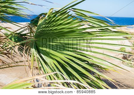 Green Palm Branche, Closeup