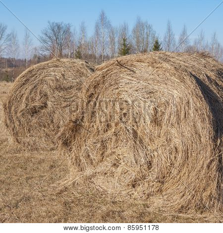 Hay stacks in farmland