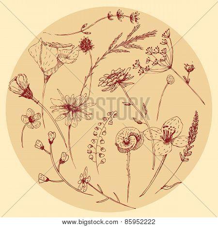 Vector Graphic Wildflower Set