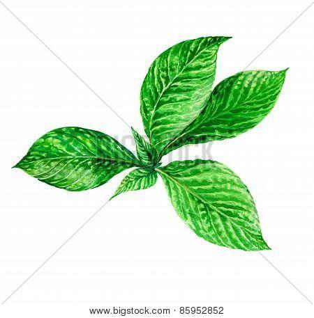 Illustration Of Exotic Leaves