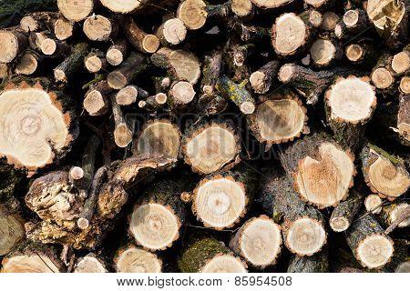 Wood preparation.