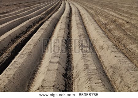 Plowed Field Close Up, Background