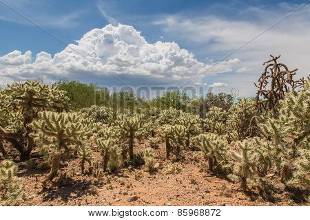 Cactus Shrubs In Wilderness