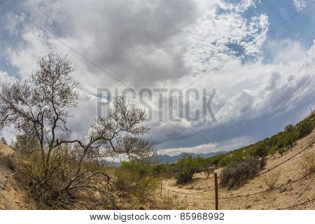 Wide Angle View Of Desert Plants