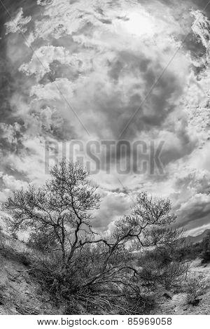 Black And White Desert Scene