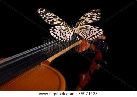 Violin And Butterfly.