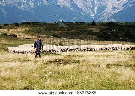 Shepherd In Molveno