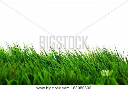Refresh Grass On White Background