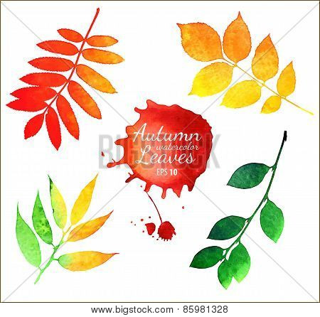 Vector watercolor autumn