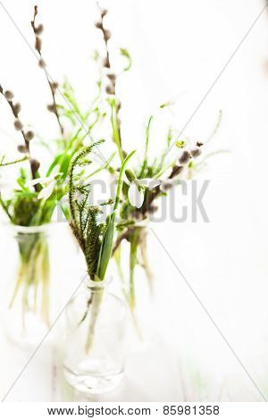 Snowdrops in the bottles