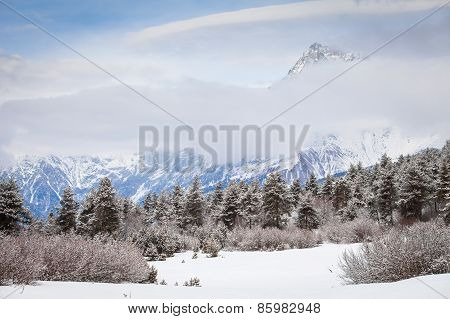 Coniferous forest in the snow at foot of mountain