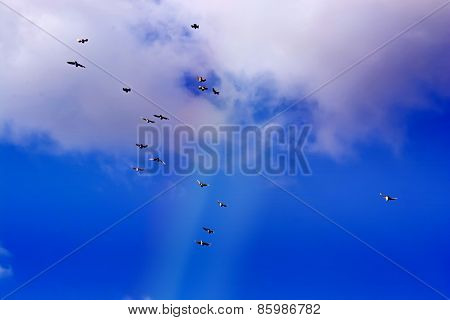 Pigeons Flying, Blue Sky, White Clouds P10