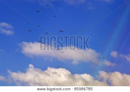 Pigeons Flying, Blue Sky, White Clouds P11