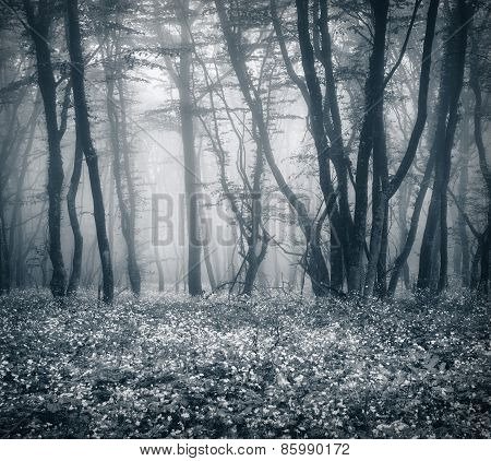 Mysterious Dark Forest In Fog With Leaves And Flowers