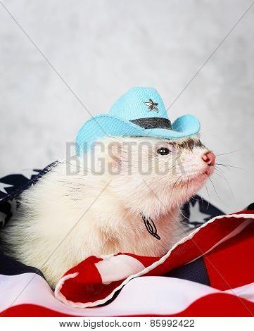 Little ferret on the USA flag background