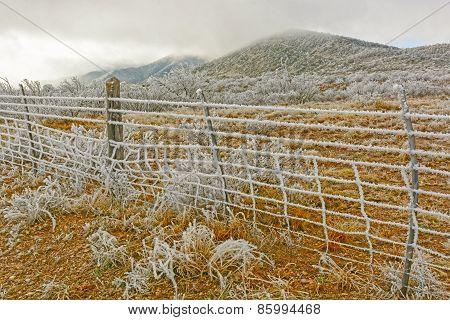 Texas Desert In A Winter Ice Storm