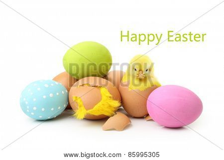 Cute little chicken and eggs isolated on white background