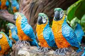 stock photo of green-winged macaw  - The concrete codel colorful macaws birds  - JPG