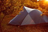 stock photo of pomegranate  - tents in the pomegranate orchard with riped pomegranates - JPG