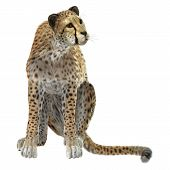 stock photo of cheetah  - 3D digital render of a cheetah isolated on white background - JPG