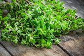picture of origanum majorana  - fresh raw green herb marjoram on a wooden rustic table - JPG